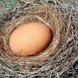 Egg in nest — Stock Photo #12214309