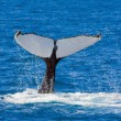 Stock Photo: Whales tail