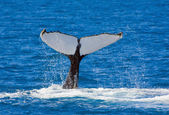 Whales tail — Stock Photo
