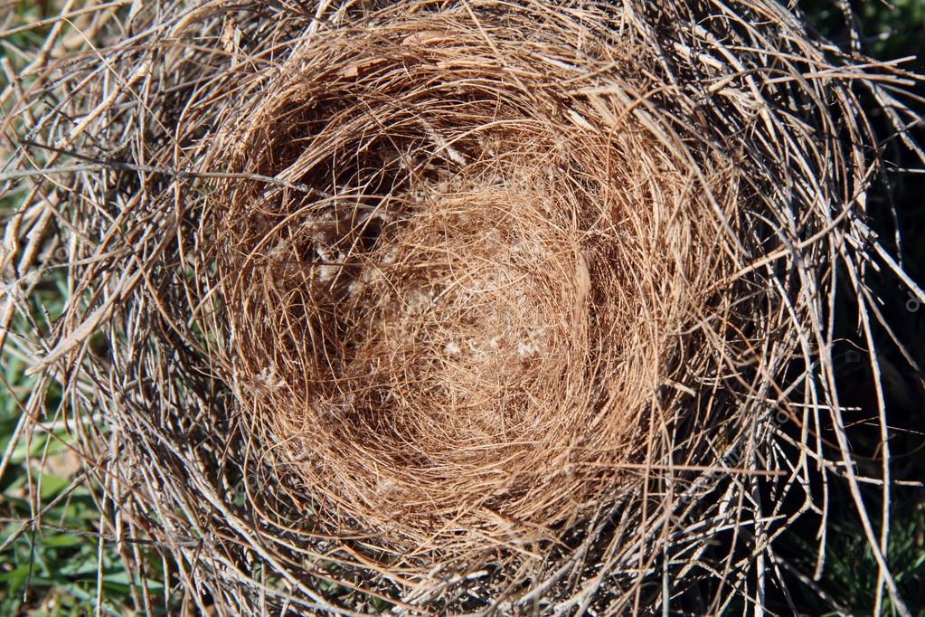 A lonely empty brown straw birds nest — Stock Photo #12214181