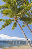 Molo s kokosovými palmami — Stock fotografie
