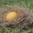 Golden egg in nest — Stock Photo #12528955