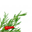 Rosemary and two birds eye chilli — Stock Photo