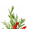 Stock Photo: Chilli and rosemary