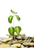 Dinero con una planta — Foto de Stock