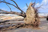 Dead tree — Stock Photo