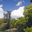 Lake Eacham - Stock Photo