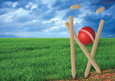Grass and cricket set — Stock Photo