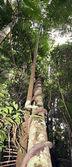 árbol — Foto de Stock
