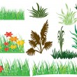 Grasses — Stock Vector