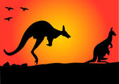 Kangaroo hopping — Stock Vector