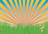 Grass with rays — Stock Vector