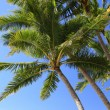 Coconut trees — Stock Photo