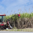 Sugar cane cutting - Stock Photo
