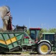 Stock Photo: Harvesting sugar cane Australia