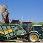 Harvesting sugar cane Australia — Stock Photo