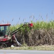 Cane harvesting — Stock Photo