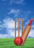 Cricket game on lawn — Stock Photo