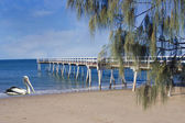 Hervey Bay in summer — Stock Photo