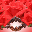 Stock Photo: Red roses and old chain