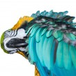 A beautiful blue Macaw — Stock Photo