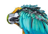 A beautiful blue Macaw — Stock Photo