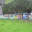 Bee hives — Stock Photo #27368155