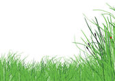 Grass on white background — Stock Vector