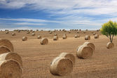 Lots of hay bales — Stock Photo