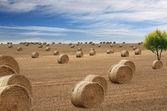 Lots of hay bales — Stock Photo