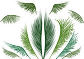 Tropical palm leaves — Stock Vector