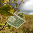 Dollar on a branch - Stock Photo