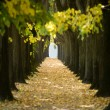 Stock Photo: Tree tunnel