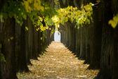 Tree tunnel — Stock Photo