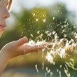 Dandelion blowing — Stock Photo