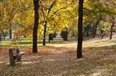Otoño en el parque — Foto de Stock