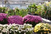 Nursery garden — Stock Photo