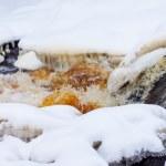 Spring mountain stream — Stock Photo