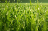 Dew on grass — Stockfoto