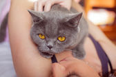 Cat lying on the chest — Стоковое фото