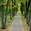 Stock Photo: Path through beautiful woodland