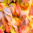 Colourful autumn or fall background — Stock Photo