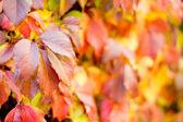 Renkli sonbahar veya sonbahar arka plan — Stok fotoğraf