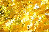 Autumn leaves against the sun — Stock Photo