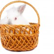 Royalty-Free Stock Photo: Curious rabbit in a wicker basket