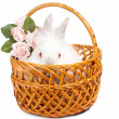 Beautiful little white bunny with roses — Stock Photo