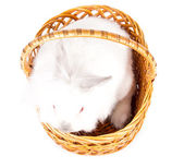 Little white bunny in a basket — Stock Photo