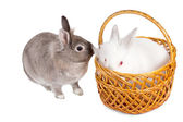 Two cute little rabbit friends — Stock Photo