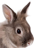 Head portrait of a beautiful rabbit — Stock Photo
