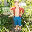 Little boy in the vegetable garden — Stock Photo